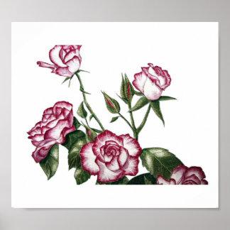 White Roses No1 Print