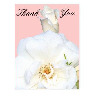 White Roses_ Postcards