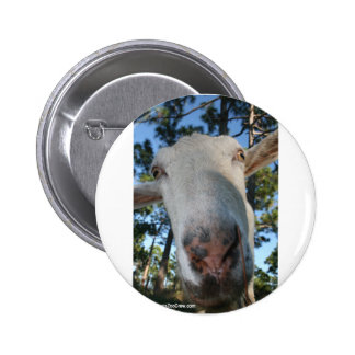 White saanen dairy goat doe nose close up HI 6 Cm Round Badge