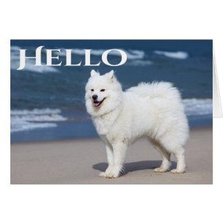 White Samoyed Puppy Dog - Hello, Thinking Of You Card