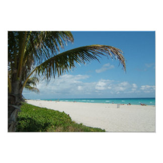 White Sand Beach w/Palm Poster