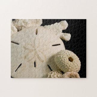White Seashells And Sand Dollar Jigsaw Puzzle