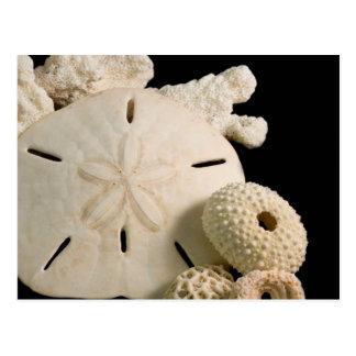White Seashells And Sand Dollar Postcard