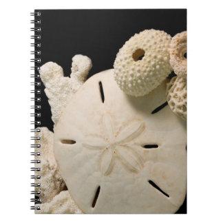 White Seashells And Sand Dollar Spiral Notebooks