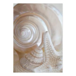 White Seashells Starfish Tropical Beach Sea Shells Pack Of Chubby Business Cards