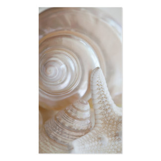 White Seashells Starfish Tropical Beach Sea Shells Pack Of Standard Business Cards