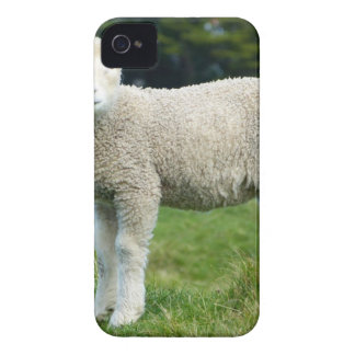 White Sheep during Daytime Case-Mate iPhone 4 Case