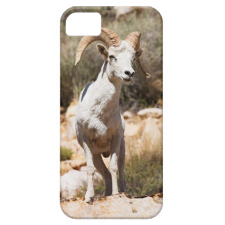 White Sheep Of The Family iPhone 5 Cases