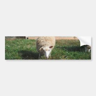 White Sheep on the Farm Bumper Sticker