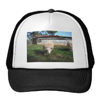 White Sheep on the Farm Cap