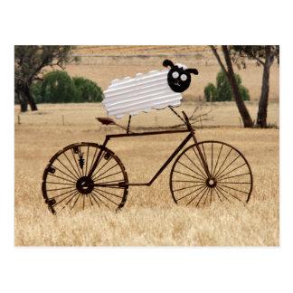 White Sheep Thrills Postcard