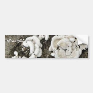 White Shelf Mushrooms Bumper Sticker