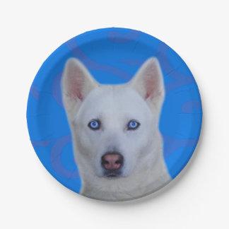 White Siberian Husky Paper Plate