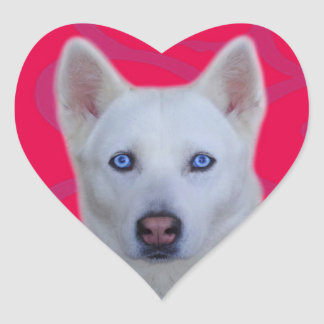 White Siberian Husky Sticker (Pink background)