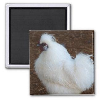 White Silkie Chicken Square Magnet