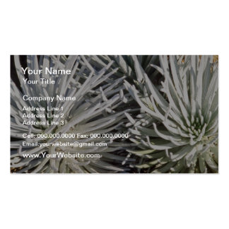 white Silversword flower Hawaii flowers Business Card