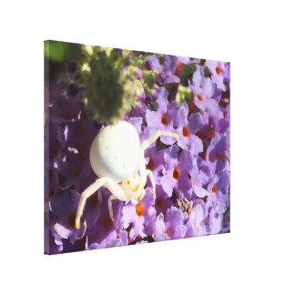 White Smiling Spider Stretch Canvas Print