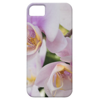 White Soft Orchids Blooming Case For The iPhone 5