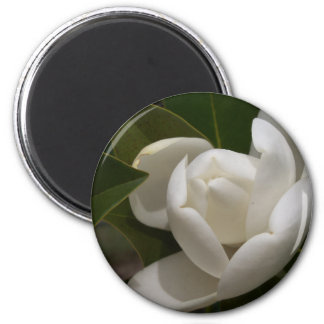white southern magnolia flower bud magnet