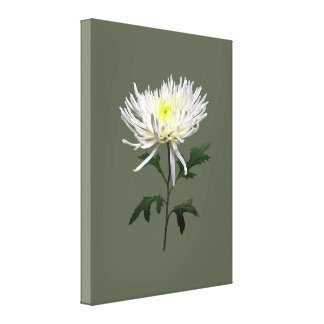 White Spider Mum Canvas Print