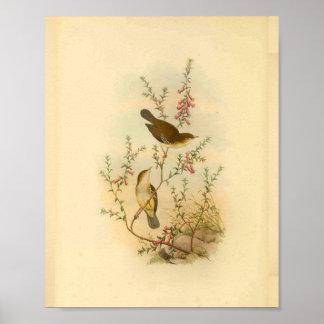 White Spotted Flycatcher Bird Vintage Print