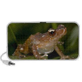 White Spotted Frog, Nytixalus pictus, Native Mini Speaker