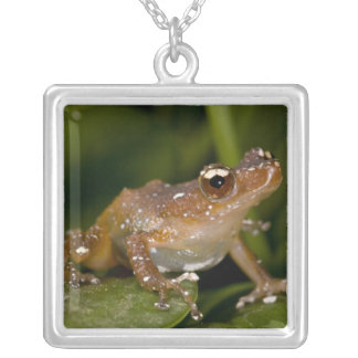 White Spotted Frog, Nytixalus pictus, Native Square Pendant Necklace