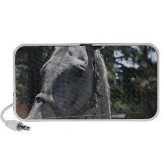 white spotted horse travel speaker