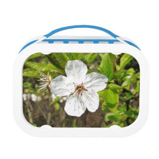 White Spring Blossom Lunch Box