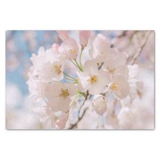 White Spring Cherry Trees Blossom Tissue Paper