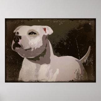 White Staffordshire Bull Terrier urban background Poster