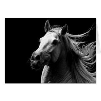 White Stallion's Pride - Horse Greeting Card