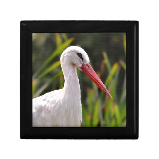 White stork among vegetation gift box