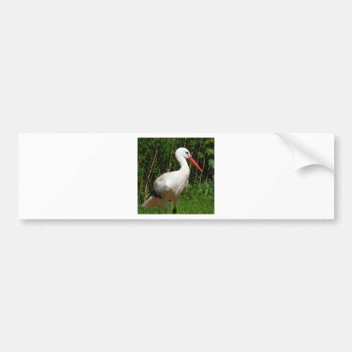 White Stork Bird Bumper Sticker