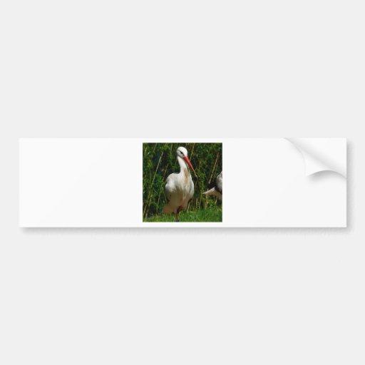 White Stork Bumper Sticker