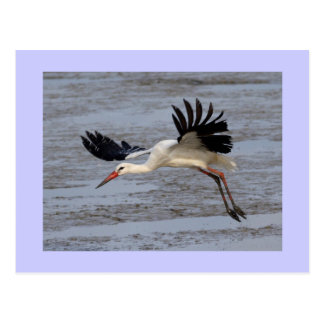 White Stork Postcard