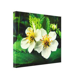 White Strawberry Flowers Macro Canvas Print
