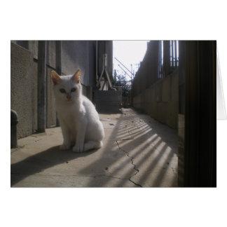 White Stray Kitten in Japan Card