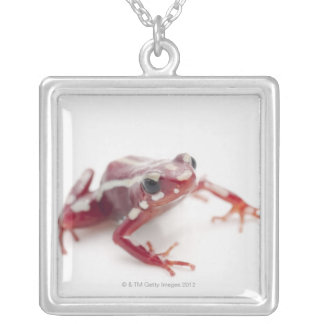 White-striped Poison Dart Frog 2 Silver Plated Necklace
