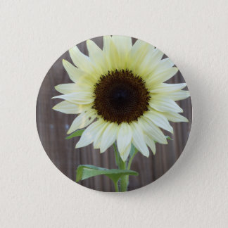 White sunflower against a weathered fence 6 cm round badge
