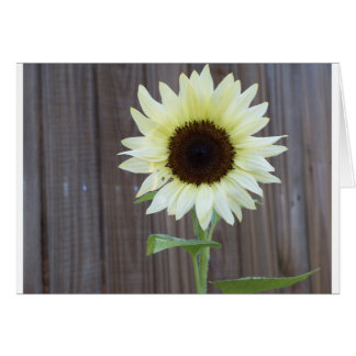 White sunflower against a weathered fence card