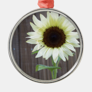 White sunflower against a weathered fence metal ornament