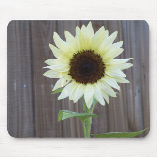 White sunflower against a weathered fence mouse pad