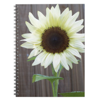 White sunflower against a weathered fence notebook