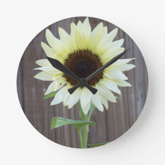 White sunflower against a weathered fence round clock