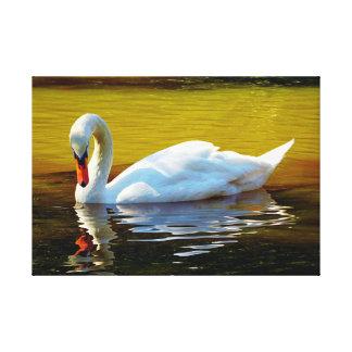 White Swam Swimming On Lake In Autumn Canvas Print