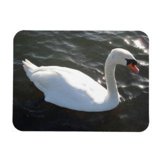 """White Swan 3""""x4"""" Magnet"""