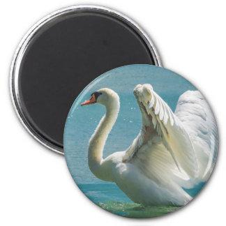 White Swan 6 Cm Round Magnet