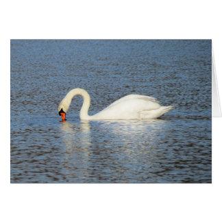 White Swan Feeding Card