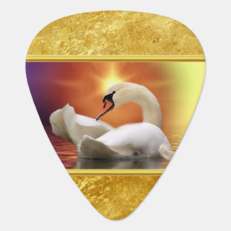White Swan in a lake with a orange gold sunset Plectrum